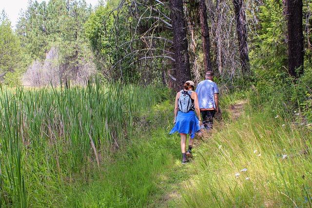 letní procházka v lese
